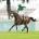 Plat  © A.P.R.H.  - Chantilly, 8 juin 2008 -  5ème course.  PRIX DE DIANE (2100m, 800000, Groupe I, Femelles)  Classic Tiercé  3.  ZARKAVA (IRE),  Soumillon Christophe  Distance
