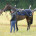 Chantilly - 23/06/2015 - Entrainement - Les Aigles - Ecurie Christiane Head-Maarek - TREVE, Pascal Galoche -