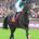 Longchamp - 04/10/2015 - Portraits - Canters - FLINTSHIRE, Maxime Guyon -