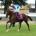 Chantilly - 02/10/2016 - QATAR PRIX DE L'ARC DE TRIOMPHE (Gr1 - Q+) - NEW BAY, Vincent Cheminaud -